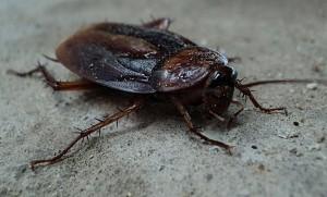 Cucaracha pagina nueva